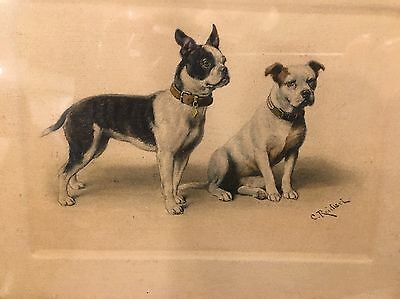 Vintage Terrier Dog Print Signed Two Dogs Etching? Antique Old