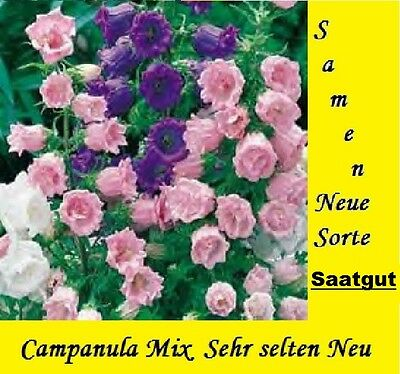 30x Campanula Mix Seeds Plant Garden Seed New Germany Flowers Seed #80