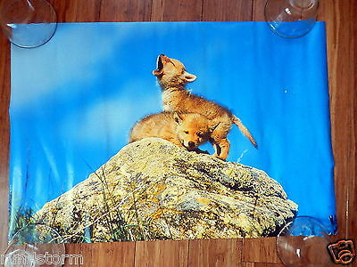 "Wolf Pups TONY STONE 23 ½"" x 16"" Poster"