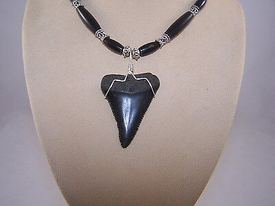 1.95 Inch GREAT WHITE Fossil Shark Tooth Necklace