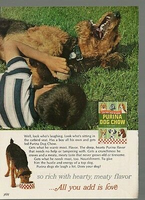Vintage Magazine Print Ad 1960's Purina Dog Chow Terrier Boy 7 1/2 X 5 1/4 W VG