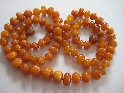Bernsteinkette Knollen Baltic Amber Necklace Butterscotch