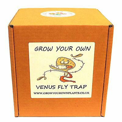 Grow Your Own Carnivorous Venus Fly Trap - Unusual Gardening Gift