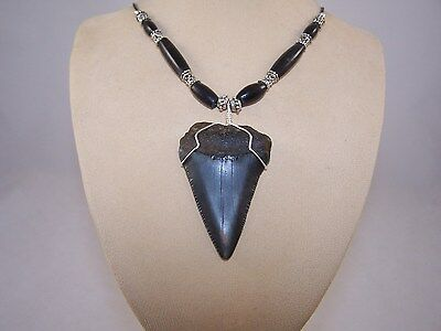 2.40 Inch GREAT WHITE Fossil Shark Tooth Necklace