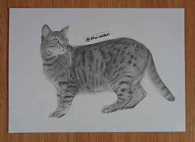 Pencil drawing of an Bengal Cat- Hand Drawn BY MOIIMRAN A6 A5 A4