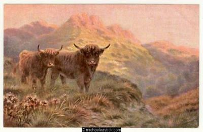 Pike, Sidney: Highland Cattle
