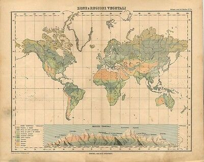 Carta geografica antica MAPPAMONDO CON REGIONI VEGETALI 1897 Old antique map
