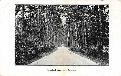 POSTCARD    SUSSEX   BUXTED   Avenue