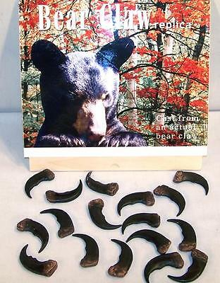 12 BULK SYTHENTIC GRIZZLY BEAR CLAW brown bears black animal claws LOT new items