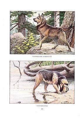 1919 Vintage Dog Print ~ Norwegian Elkhound & Otterhound Painting~ Louis Fuertes