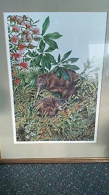 Art print kiwi birds / nature / limited edition New Zealand Artist Karen Baddock