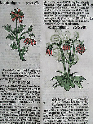 Incunable Leaf Hortus Sanitatis Elm Tree etc. Colored Woodcut Venice - 1500