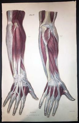 1836 Large Antique Print - MUSCLES MEDICAL ANATOMY BODY BONES LIGAMENTS  (20)