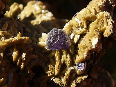 Siderite with Fluorite, from Panasqueira Mine, Portugal. 8 x 5 cm.