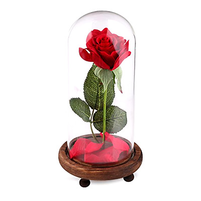 Red Silk Rose in a Glass Dome on Wooden Base Fallen Petals Beauty and the Beast