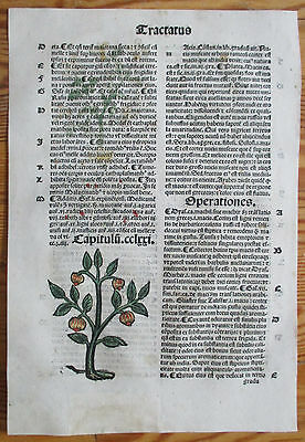 Incunable Leaf Hortus Sanitatis Nutmeg Colored Woodcut Venice - 1500