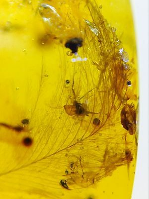 YL0412 Dinosaur Feather in Fossil Burmite Amber