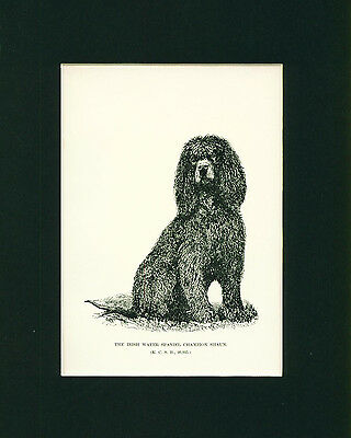 ANTIQUE Dog Print 1892 Irish Water Spaniel Dog named Champion SHAUN
