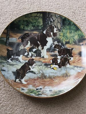 Springer Spaniels PLATE CLASSIC SPORTING DOGS ROBERT CHRISTIE