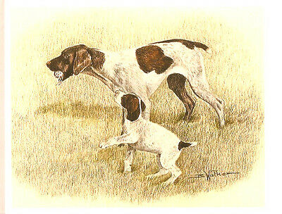 German Shorthaired Pointer and Pup Open Edition Art Print by Barbara Walker