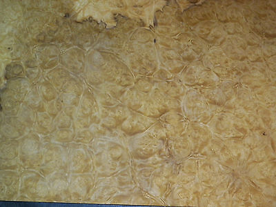 Myrtle Burl Raw Wood Veneer, 4 sheets @ 12.25 x 30 inches. 1/42nd       r1146-47
