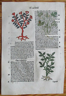 Incunable Leaf Hortus Sanitatis Dragons Blood Tree Colored Woodcut Venice - 1500