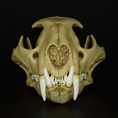 Leopard Skull Replica (Real Size) / Vintage Finish