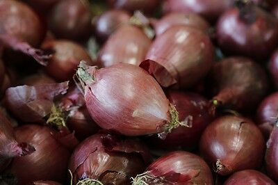 ONION 'Red Tropea Long' 100+ seeds HEIRLOOM vegetable garden WINTER gourmet