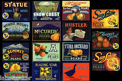 Lot 15 Vintage Original California Pear Crate Labels Kitchen Deocr Great Graphic