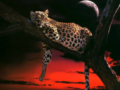 Beautiful LEOPARD in TREE - Canvas Print Poster 8X12""