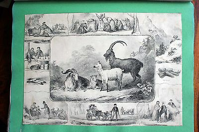 Large Victorian Scrapbook Album 40 Sides Prints Cartoons Original Drawings