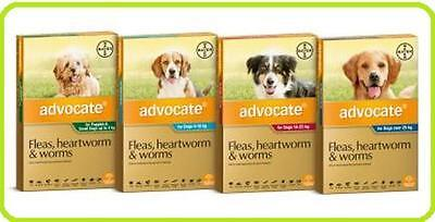 Advocate Flea and Worm/Heartworm Treatment For Dogs - All Sizes/Including Single