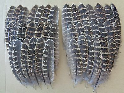 "40 Melanistic Hen Pheasant Wing Feathers 5"" - 6"" - Fly Tying Millinery"