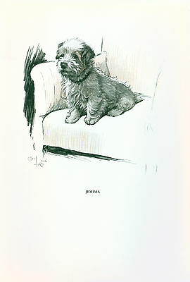 Dog Print 1930 Dandie Dinmont Terrier sits on Chair by CECIL ALDIN Vintage