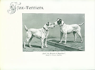 Dog Print 1904 Wire Fox Terrier named Dogs Antique