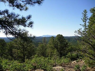40 Acres Wooded Colorado Land 4 Sale. Las Animas County. Roads to Property Ranch