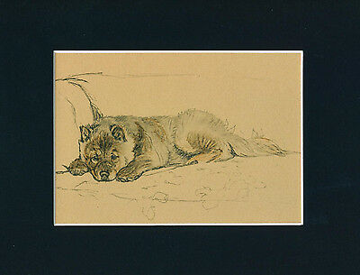 Dog Print 1934 Chow Chow by CECIL ALDIN Vintage