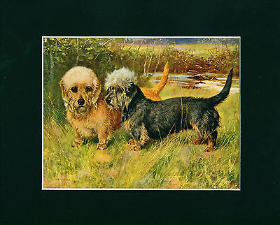 Dog Print 1907 Dandie Dinmont Terrier Dogs by Arthur Wardle ANTIQUE