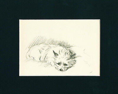 Dog Print 1946 Cairn Terrier Dog by Lucy Dawson resting