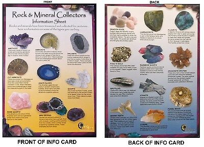 Laminated Rock & Mineral Collectors Information Sheet Size A5 Labradorite Fossil