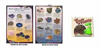 Size A5 Laminated Rock & Mineral Collectors Info Sheet The Study of Fossils Kids