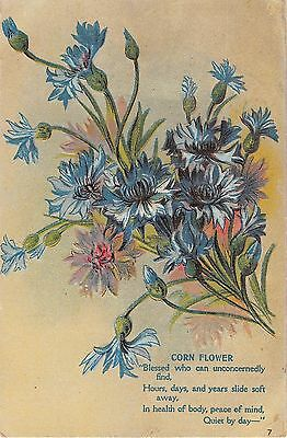 Lovely Cornflowers on 1911 Postcard with Poem - No. 7