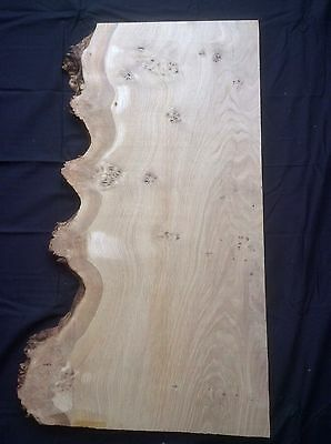 Waney Edge/ Live Edge Character Patch Burr Oak Board/ Timber/ Wood