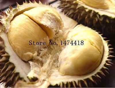 10pcs Durian Seeds Delicious Tree King Of Fruit Rare Plants Bonsai Free Shipping