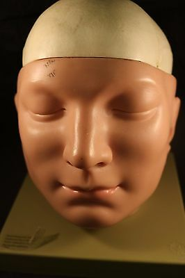 Somso Human Model  Base of the Head with Brain, Falx and Tentorium Removable