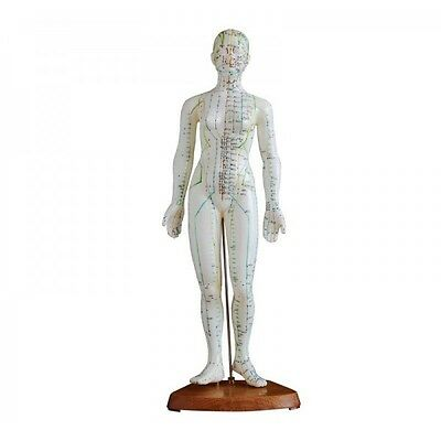 Female Acupuncture Model 48cm with Wooden Base