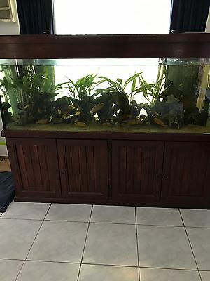 "Fish Tank/Aquarium 600litre 72"" 23"" 24.5"" Glass Tank With FULL SET UP"