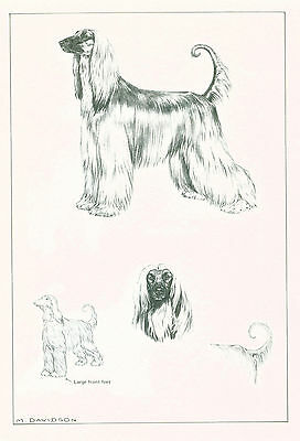 Dog Art Print Afghan Hound Dog by Davidson