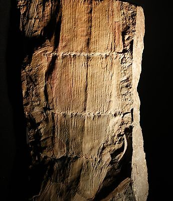 Very nice carboniferous calamite trunk fossil - detailed preservation