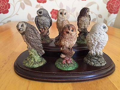 Royal Doulton Figurines - Owls On Display Stand